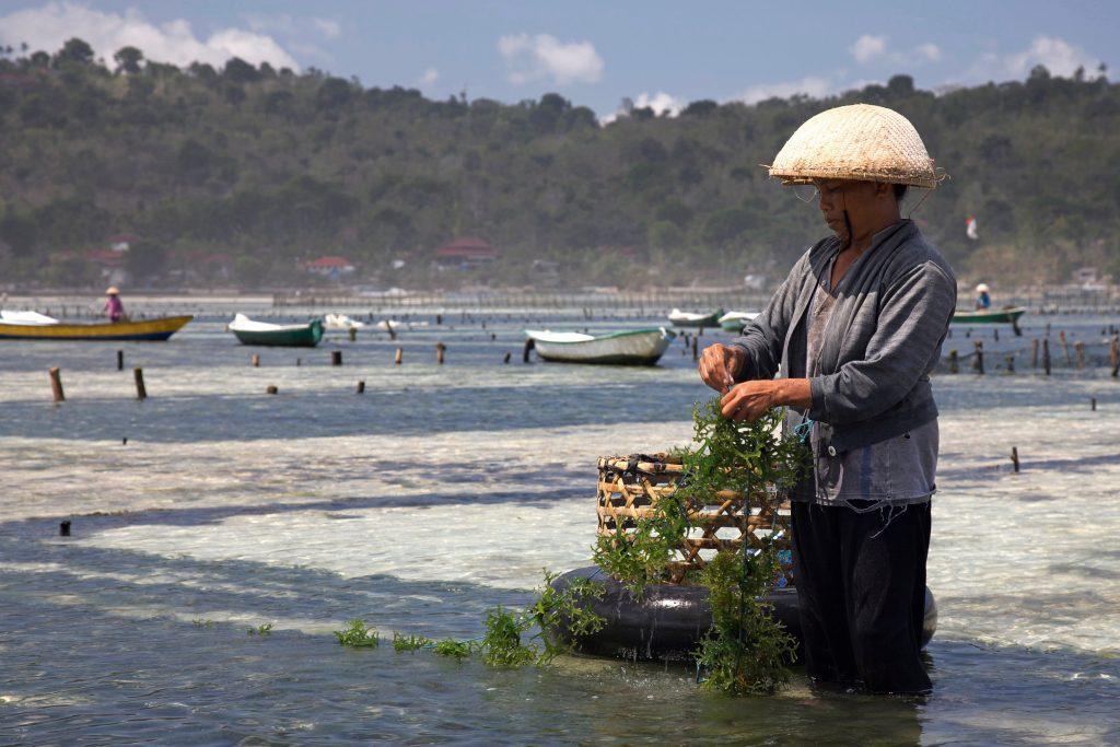 Le alghe salveranno il Mondo